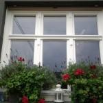 Fenster Altbausanierung